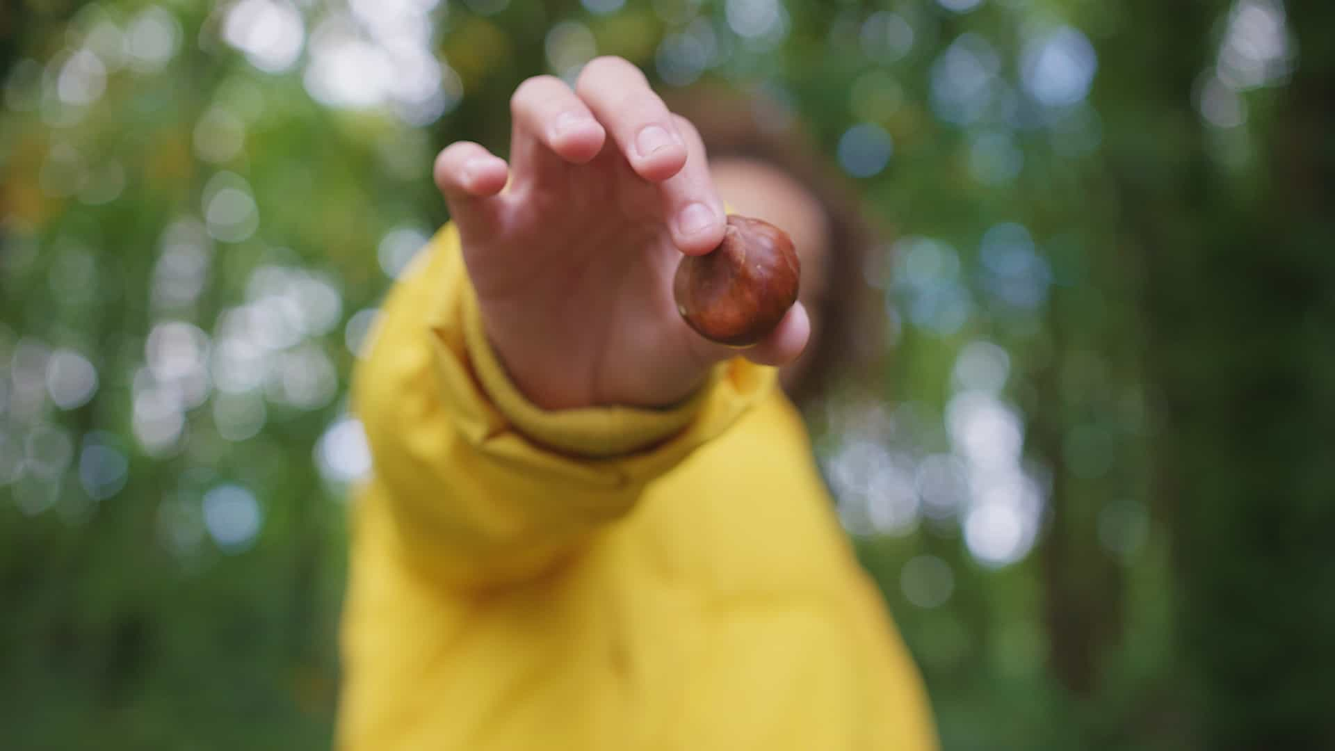 Young person holding a conker to camera